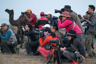 A group of Japanese photographers in a staged shoot during the Pushkar Camel Fair, Pushkar, Rajasthan, India. Japanese photog...