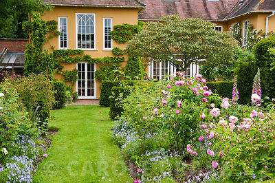 Grass path leads between beds of David Austin roses underplanted with Viola cornuta toward apricot coloured house. Private Ga...