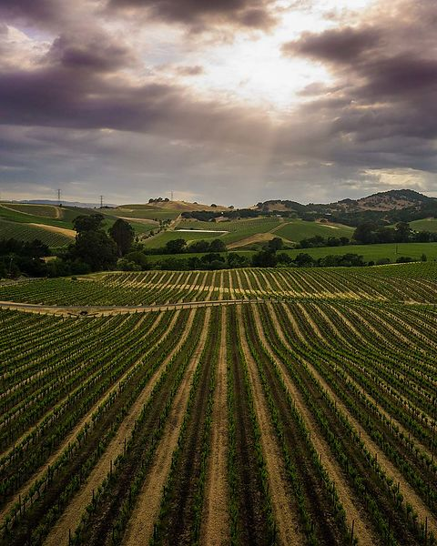An oddly-timed storm for May passed over most of Sonoma and Napa jostling the sky with thunder,  dousing the landscape with n...
