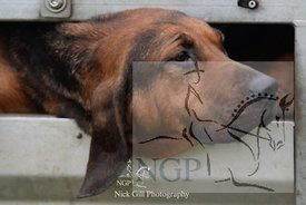 highmoor_n_bloodhounds_23_12_18_0001