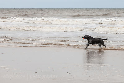 Happy dog on the beach:
