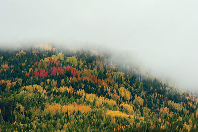 Mist over forest landscape in autumn, Zabaikalsky National Park, Lake Baikal, Siberia, Russia, September 2013.