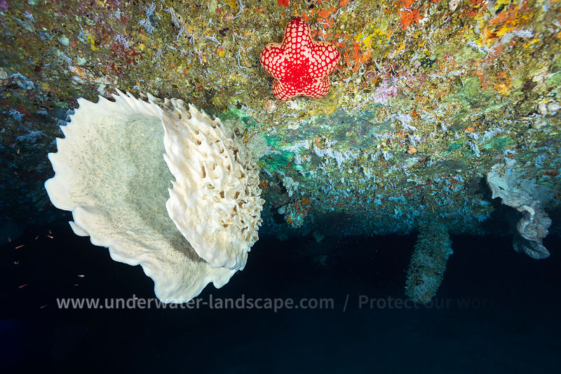Sponge and starfish from the mesophotic zone