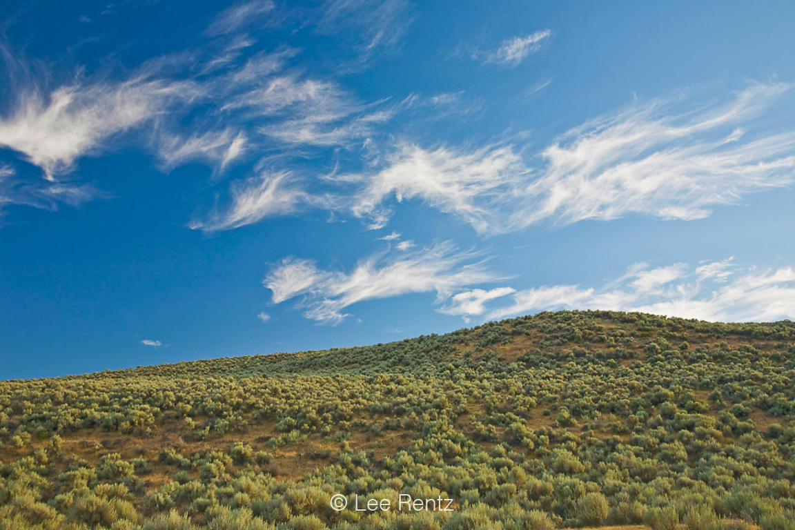 Sagebrush-covered hill with cirrus clouds above, Antelope Island State Park in the Great Salt Lake, Utah, USA, August, 2008_U...