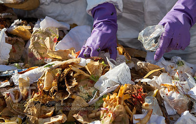 Restaurant Waste Audit