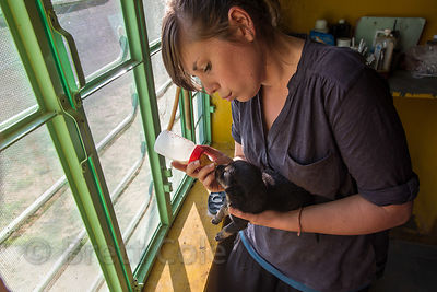 A volunteer bottle feeds a tiny puppy at the Tree of Life for Animals rescue center (tolfa.org.uk) near Pushkar, Rajasthan, I...