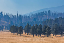 Smoke Rising from a Controlled Burn in Valles Caldera National Preserve