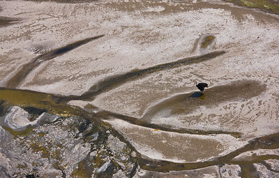 Aerial view of an Ostrich (Struthio camelus) on Lake Natron, Rift Valley, Tanzania, Africa, August 2009