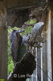 Deteriorating End of All-Concrete Snowshed on Iron Goat Trail