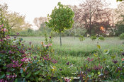 The sun rises beyond meadows around the garden, with honeysuckle clad fence in the foreground. Westbrook House, West Bradley,...