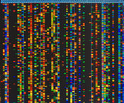 Automatic DNA Sequencer Display