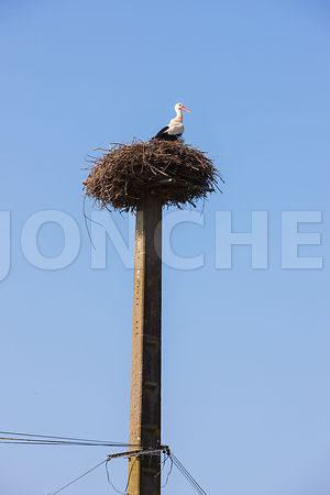 Photo d une cigogne perchee sur son nid
