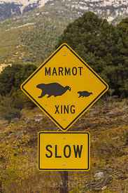 Marmot Crossing Sign in Great Basin National Park