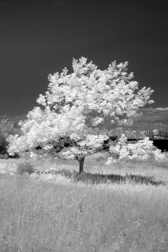ACutting_tree_IR_0035