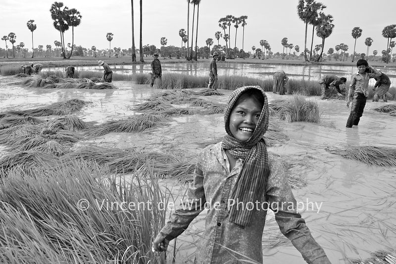 La Fille de la Rizière - Rice Field Girl