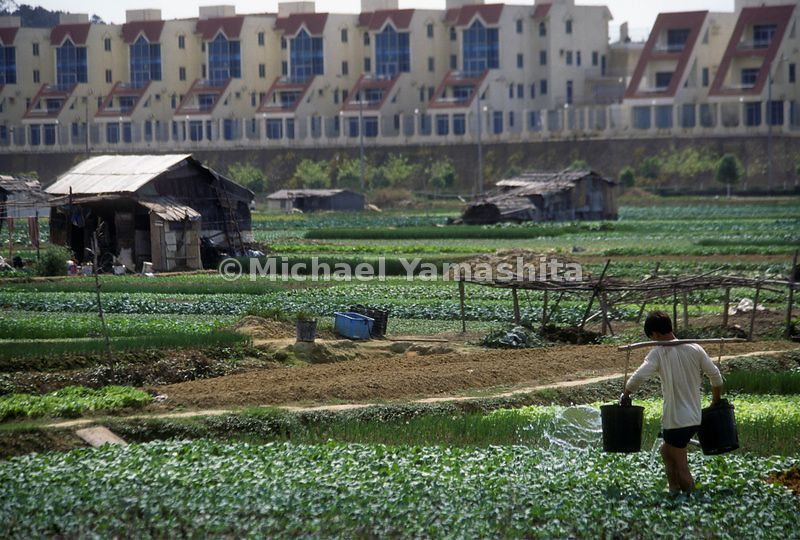 Farmers rent and work land from farmers now rich, living in the condos in the background. Changan, China