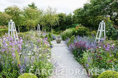 A flower garden planted with a mix of catmint, honesty, anthriscus, astrantias, penstemons and other herbaceous perennials wi...