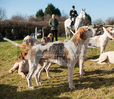 Hounds at the Meet - Neil Coleman's last day, Toft, Lincolnshire