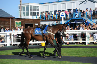 5.05pm 31st August 2013 Handicap Steeple Chase with winner Easily Pleased