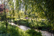 Bamboos beside a tributary of the River Avon running through the Japanese garden at Heale House, Middle Woodford, Wiltshire o...