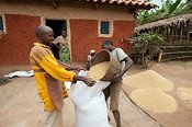 Family filling bags with harvested rice. Rwanda