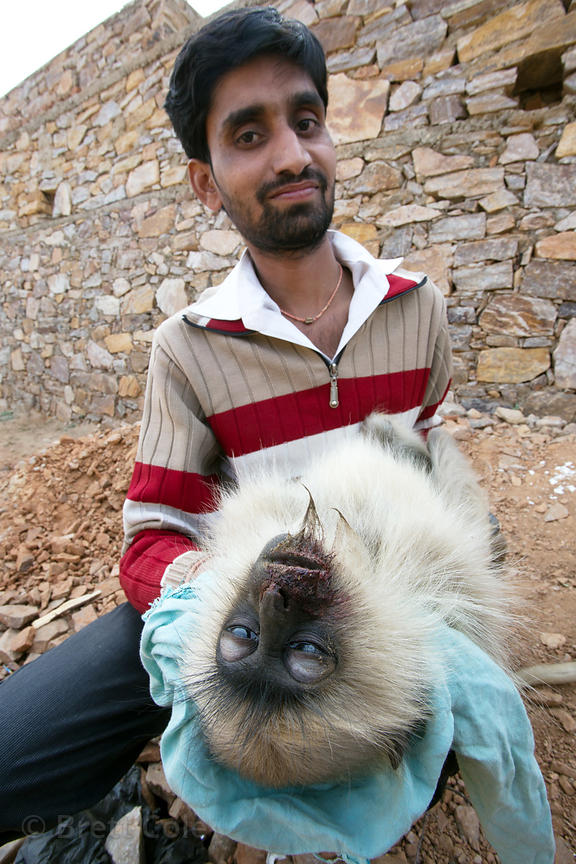 A man holds a langur monkey that was killed while crossing power lines in Pushkar, Rajasthan, India. Electrocution is an issu...