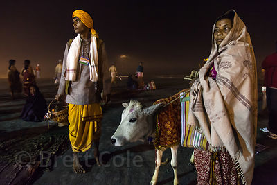 A man walks a cow around for donations at the Gangasagar Mela, Sagar Island, India. Gangasagar is a Hindu pilgrimage to Sagar...