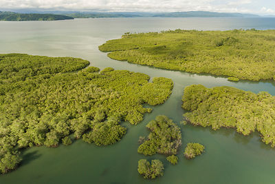 Aerial view of Mangrove forest, Osa Peninsula, Costa Rica, May 2017.