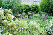 View from the White Borders into the Topiary garden over mounds of hebe and perennial pea. Rodmarton Manor, Rodmarton, Tetbur...