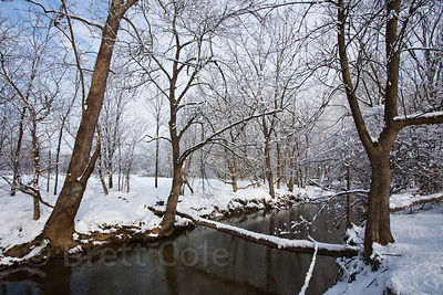 Snow in woodlands in Seneca Creek Park, Maryland