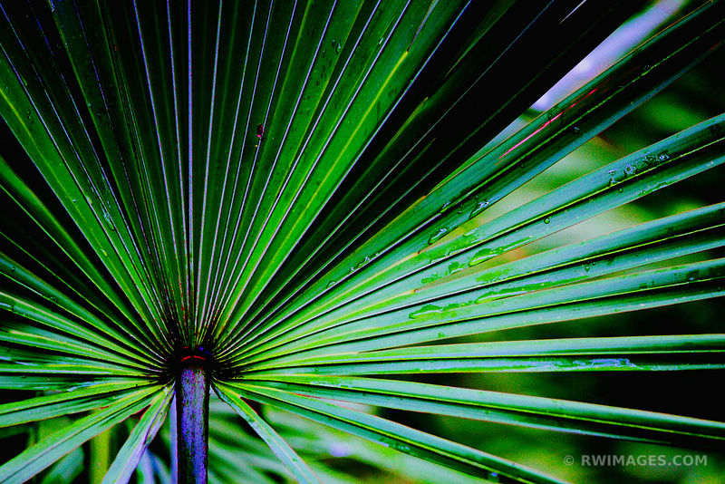 PALMETTO LEAF CUMBERLAND ISLAND GEORGIA COLOR