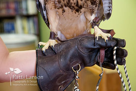 Leather gloves and jesses for handling raptors