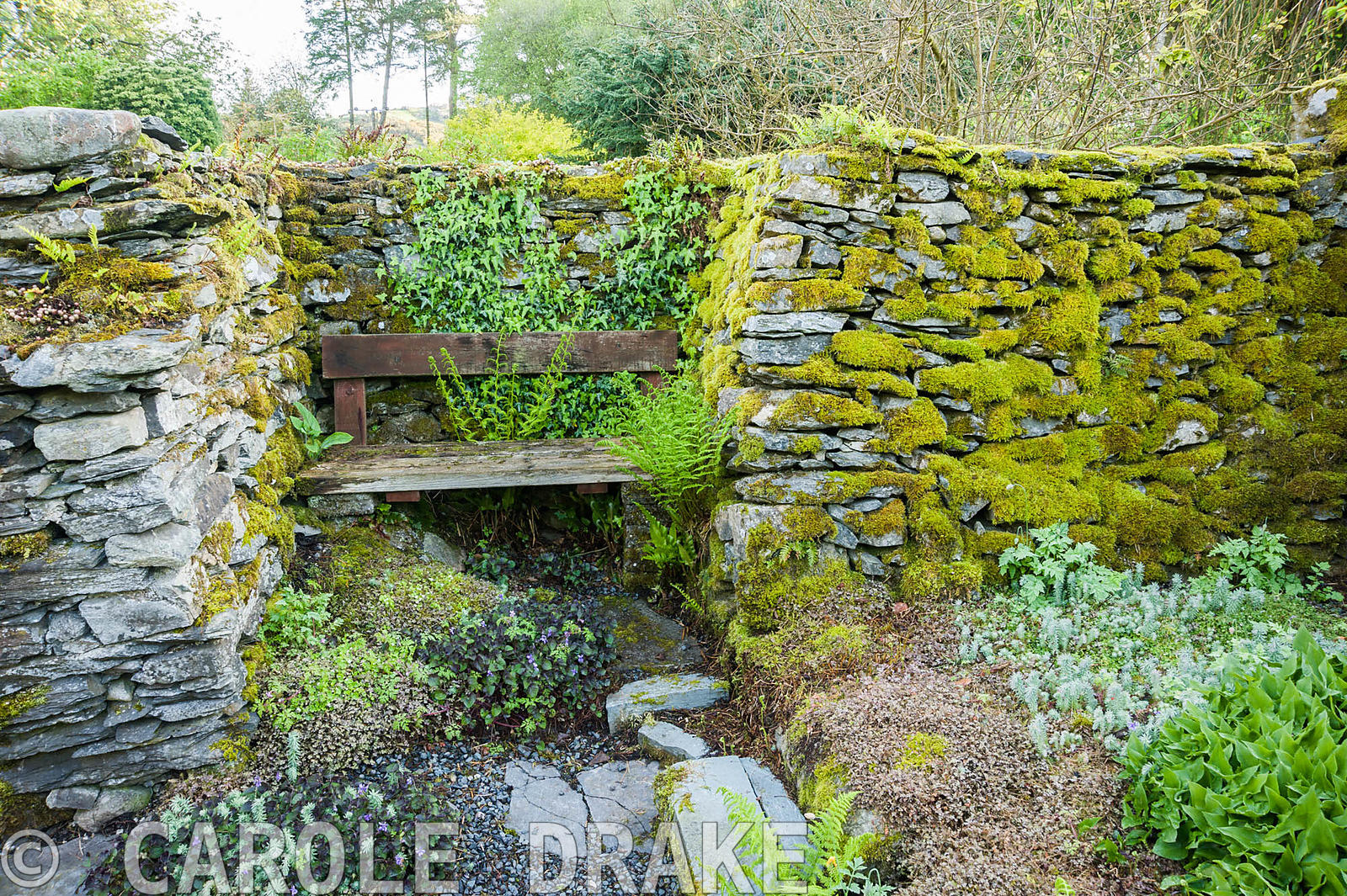 The Privy Garden, its stone walls covered with mosses, ivy and ferns. Windy Hall, Windermere, Cumbria, UK