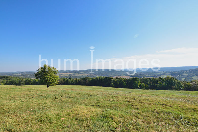Nature Stock Photos: Lone tree in a field on top of an Arkansas mountain