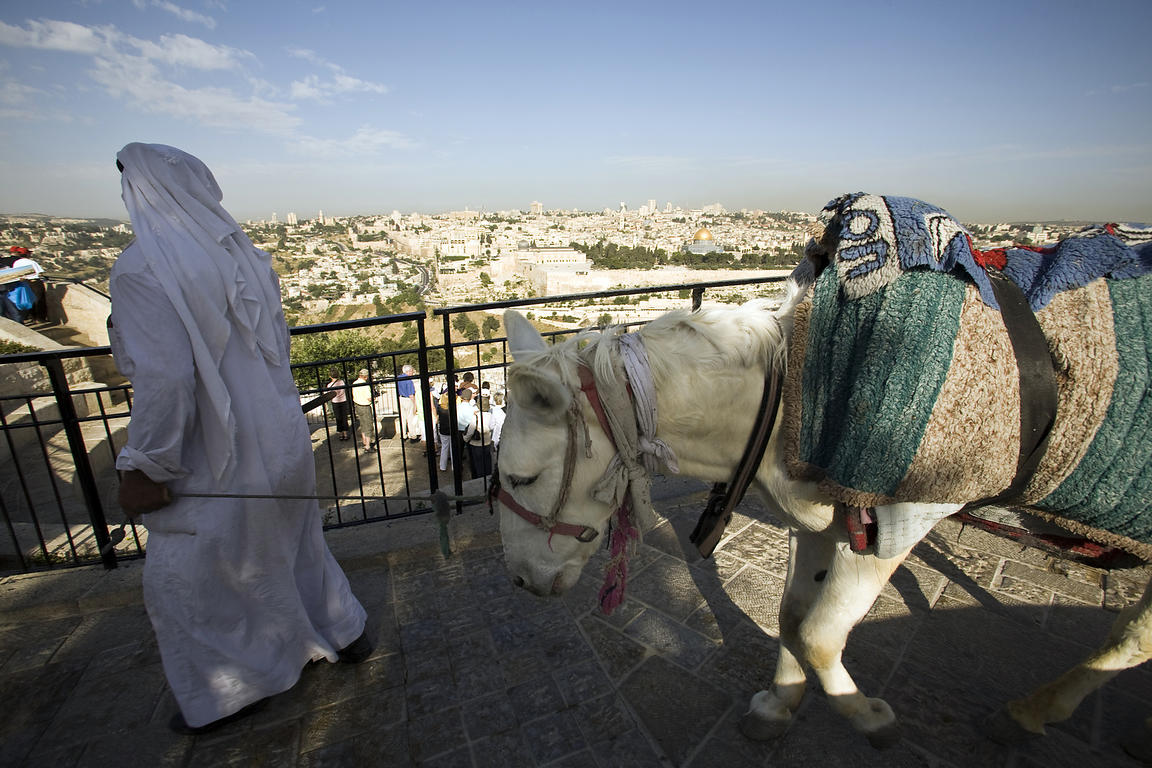 Israel - Jerusalem - A donkey used by tourists in front of a view of the Old City as seen from the Mount of Olives