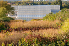 The Glasshouse and Glasshouse borders, designed by Piet Oudolf, in autumn. RHS Gardens Wisley. © Rob Whitworth