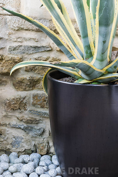 Contemporary courtyard garden designed by Amir Schlezinger. Agave americana var striata in tall black planter with pebbles ar...