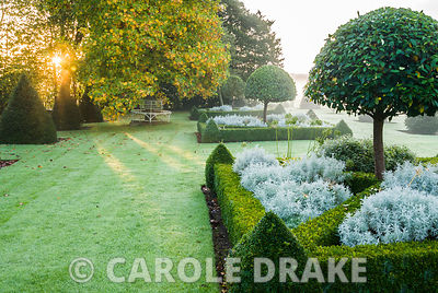 Box parterre contains clipped umbrella laurels and santolina with yew pyramids framing lawn leading into surrounding countrys...