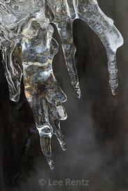 Ice Formations along Lehman Creek in Great Basin National Park