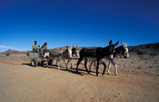 Donkey cart, common transport in Riemvasmaak, Northern Cape, South Africa
