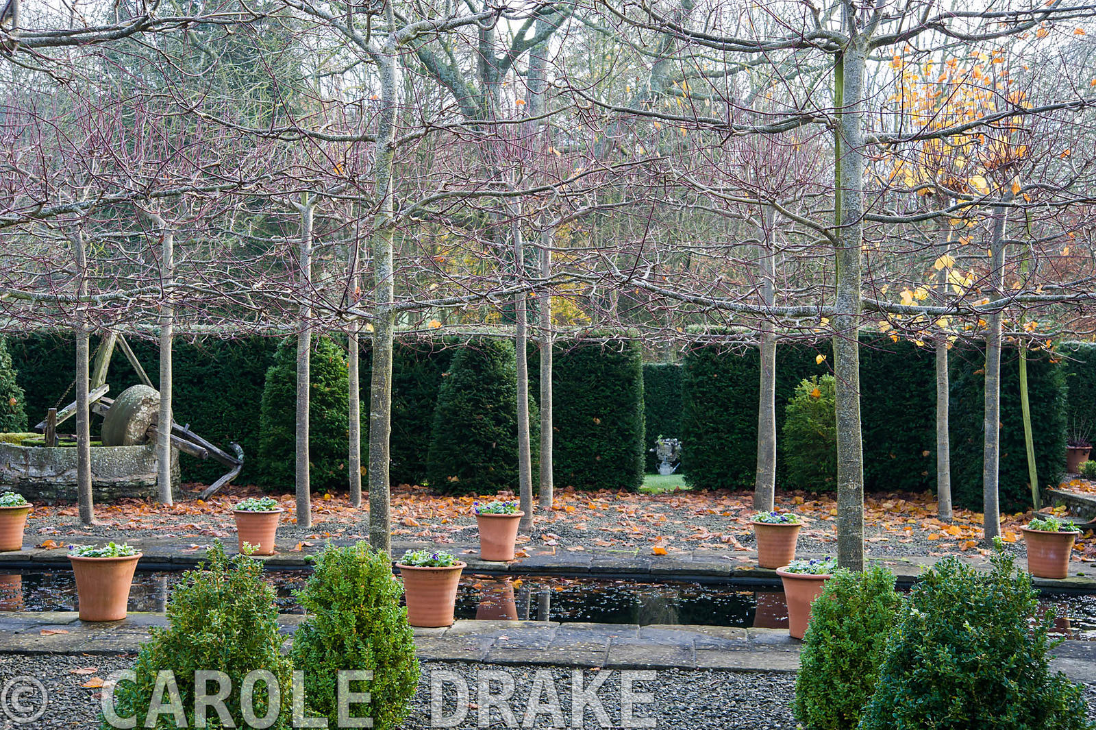 Pleached limes separate the Hildyard featuring 28 box cones in gravel at the front of the house from the Canal garden.