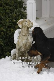 2010-01-10 KSB Hounds & Puppies in the Snow