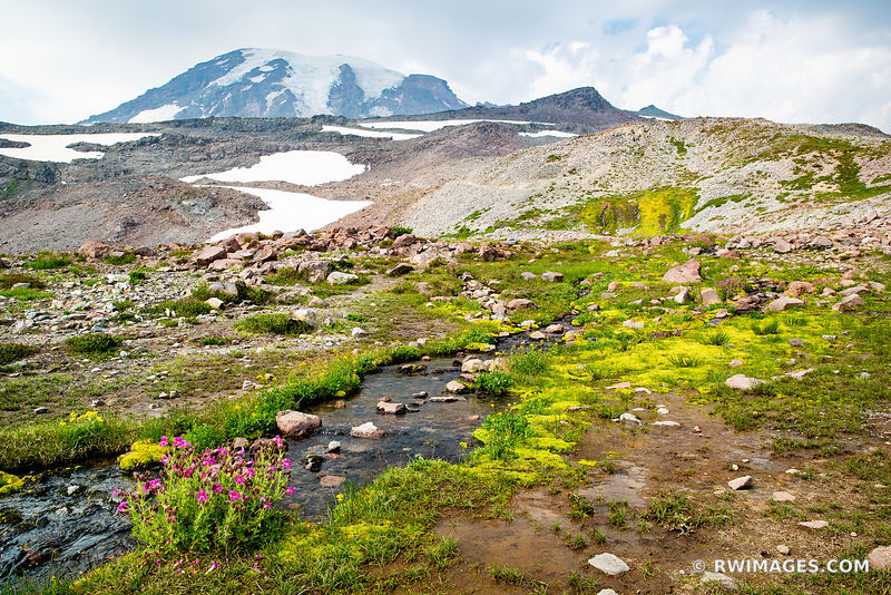 CREEK ALPINE MEADOW SUMMER WILDFLOWERS MOUNT RAINIER NATIONAL PARK WASHINGTON