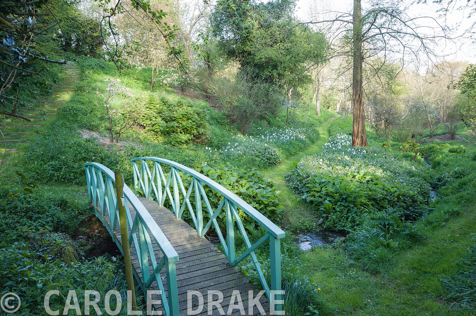Painted blue bridge crosses the stream that runs through the valley garden. Brilley Court Farm, Whitney-on-Wye, Herefordshire...