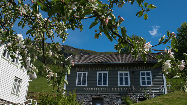 Blostrende frukttrær / flowering fruit trees in Norway