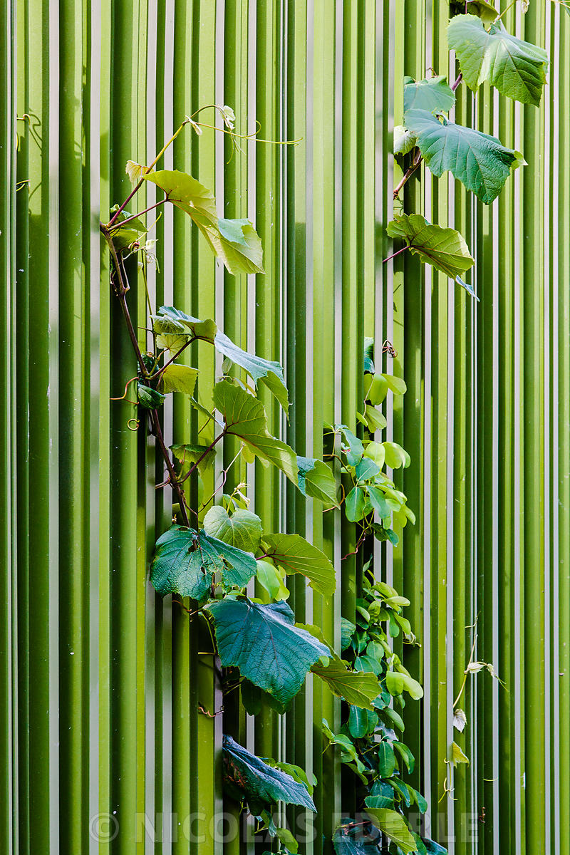 Composition en verts (Paris, juin 2015)