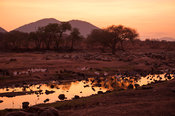 Yellow-billed storks (Mycteria ibis)  in the Great Ruaha River at sunrise, Ruaha National Park, Tanzania