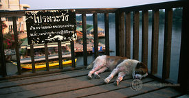 Thailand - Bridge Over River Kwai (Mangy Dog Napping)