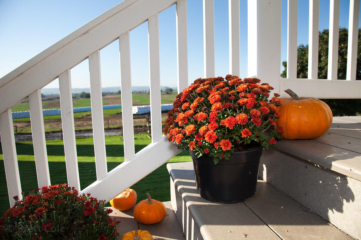 Flowers and pumpkins on the steps of a farmhouse in Amish country, Lancaster, Pennsylvania