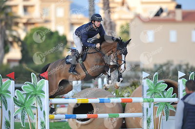 Oliva, Spain - 2019 February 14: 7 years old 1m35 during CSI Mediterranean Equestrian Spring Tour 2.(photo: 1clicphoto.com)